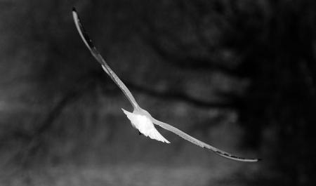 bird41